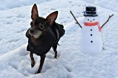Xacorka-a-snehulak