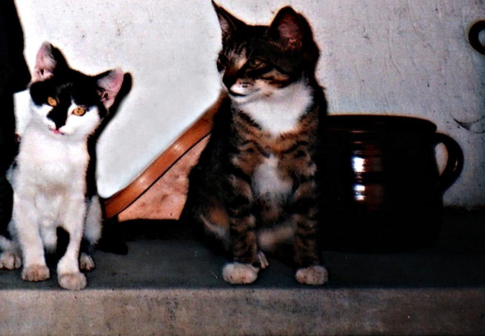 Bertík a Sesík